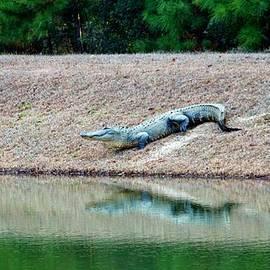 Cynthia Guinn - Happy Alligator