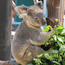 Ausra Huntington nee Paulauskaite - Happy Calm Koala