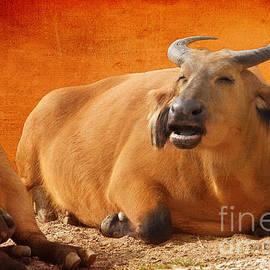 Terri Waters - Happy Congo Buffalo