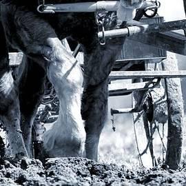 Dan Sproul - Hard Labor  On The Farm