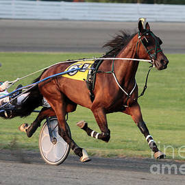 Harness Racing 5 by Dwight Cook