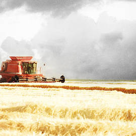 Harvesting The Grain by Cindy Singleton