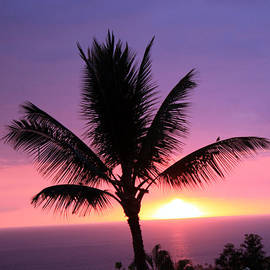 Karen Nicholson - Hawaiian Sunset and Palm