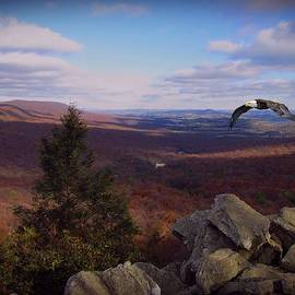 Hawk Mountain Sanctuary W Eagle by David Dehner