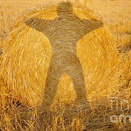 Thomas Carroll - Hay Shadow I