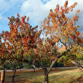 Marlene Rose Besso - Heart Autumn Tree