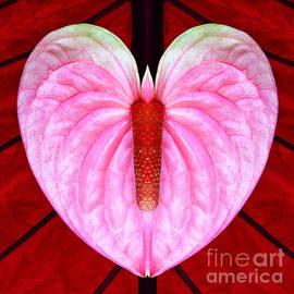 Joseph J Stevens - Heart Flower Butterfly w Candle