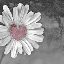Linda Sannuti - Heart Of A Daisy