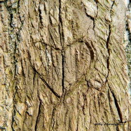 Heart of the Tree by Kathy Barney