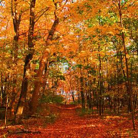 James Hammen - Heavenly Pathway