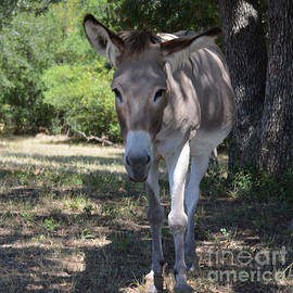 Donkey Hello There by Ruth  Housley