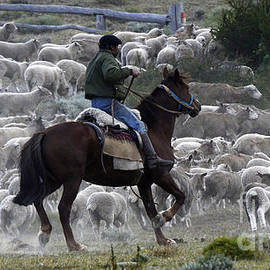 Bob Christopher - Herding Sheep Patagonia 1