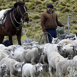 Bob Christopher - Herding Sheep Patagonia 3