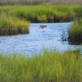 Bill Cannon - Heron in a Salt Marsh