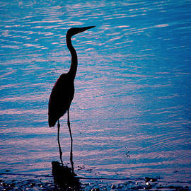 Herons Moment by Karol Livote