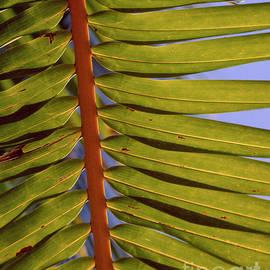 Palm tree closeup by Tracy Knauer