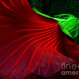 Mike Nellums - Hibiscus Red