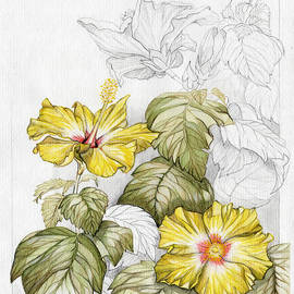 Elena Yakubovich - Hibiscus Watercolor Pencil Study