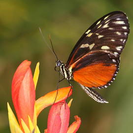 Butterfly high upon a flower by Ruth Jolly