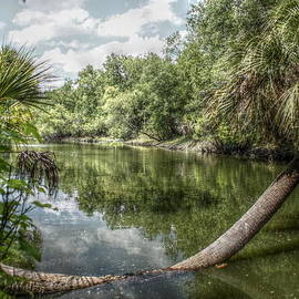 Hillsboro River Morris Bridge Wilderness Park by Howard Markel