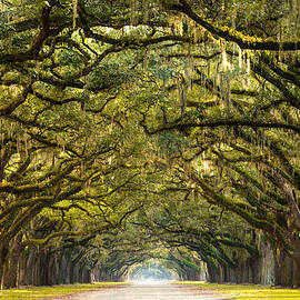Serge Skiba - Historic Wormsloe Plantation Oak Trees