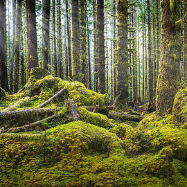 Dan Mihai - Hoh Rainforest Log Jam
