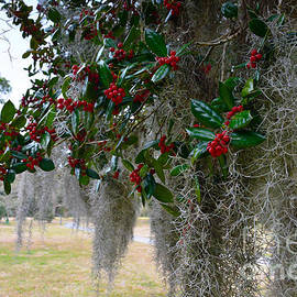 Holly Tree With Spanish Moss by Catherine Sherman