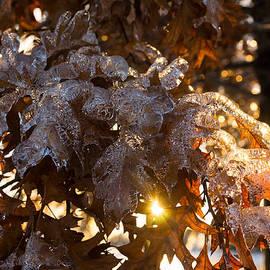 Georgia Mizuleva - Honey Colored Honeycomb Ice With a Sun Flare