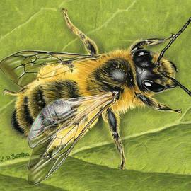 Honeybee On Leaf by Sarah Batalka