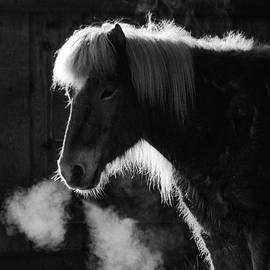 Horse in black and white square format