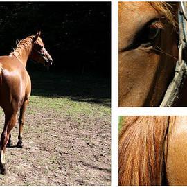 Julien Boutin - Horse Montage