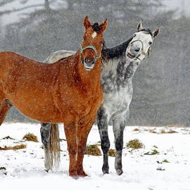 Gary Corbett - Horses in the snow
