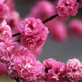 Joy Watson - Hot Pink Blossom