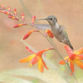 Angie Vogel - Hovering in the Crocosmia
