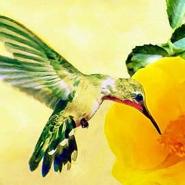 Hummingbird And California Poppy by Bob and Nadine Johnston