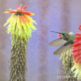 Hummingbird Bliss by Michele Hancock