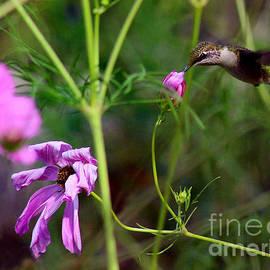 Karen Adams - Hummingbird in Garden