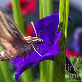 Janice Rae Pariza - Hummingbird Moth
