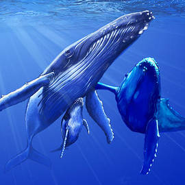 Cade Butler - Humpback Whales
