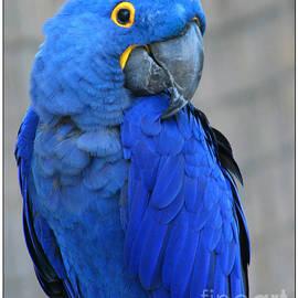 Mariarosa Rockefeller - I Am So Blue