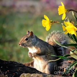 Nava Thompson - I Found Spring