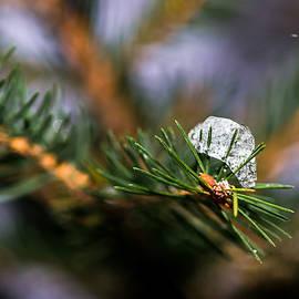 Alexander Senin - Ice Covered Christmas Tree 1