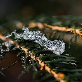 Alexander Senin - Ice Covered Christmas Tree 5