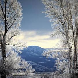 C Ray  Roth - Ice Trees