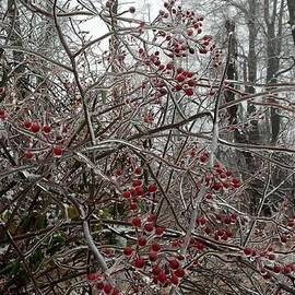 Mark Victors - Iced Red Berries