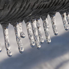 Donna Doherty - Icicles