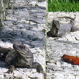 Iguana Bask In The Sun With You by Patti Whitten