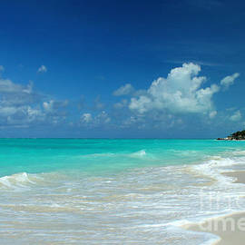Iguana Island Caribbean by Robyn Saunders