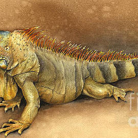 Nan Wright - Iguana