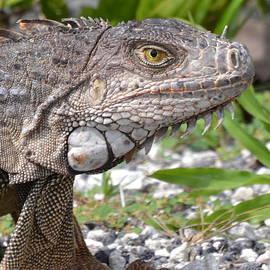 Gustave Kurz - Iguana Portrait